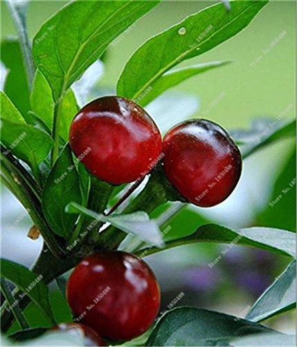 Cerise poivre Graines de légumes jardin Bonsai Chili usine Décoration non-Ogm Jardin Cuisine Assaisonnement Alimentation 200 Pcs 7