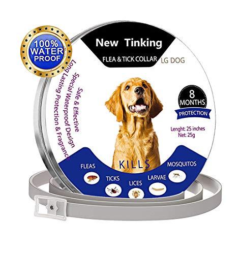 Ajustable para Mascotas peque/ñas y Medianas 8 Meses de protecci/ón Kylewo Collar de garrapatas para Perros y Gatos Collar de garrapatas Collar de prevenci/ón de pulgas y garrapatas