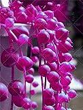 HANO 100 pz/Sacchetto di Perle clorofhytum Piante grasse Bonsai Perline Senecio Rowleyanus Bonsai Piante in Vaso Anti Radiazioni : 8