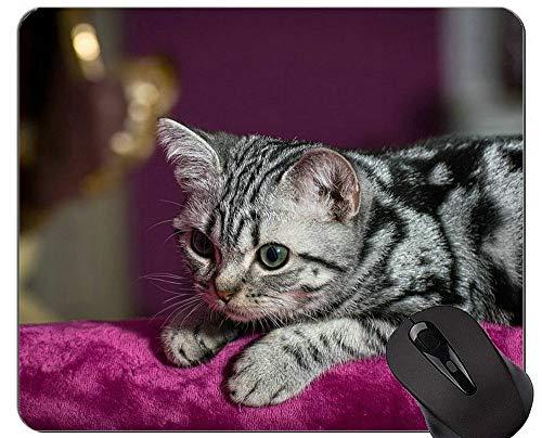 Yanteng Alfombrillas de ratón, Lindas Alfombrillas de ratón británicas de Pelo Corto Personalizadas, Alfombrilla de ratón de Gatito con Borde Cosido