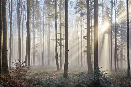 Muralo Fototapete Wald im Nebel 300 x 450 cm Vlies Tapete Wandtapeten Bäume Sonne Wohnzimmer Schlafzimmer Moderne Wandbilder XXL Landschaft Panorama Wand Dekoration