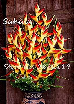 Vistaric 20 Pcs Rare Couleur Aloe Graines Succulentes Chanceux Aloe Plantes Plante D'intérieur Bonsaï Graines Comestibles Beauté Fruit Végétable Graines Facile Cultiver