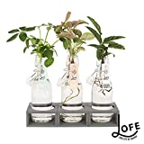 Plante d'intérieur de Botanicly – Jungle urbaine en bouteille...