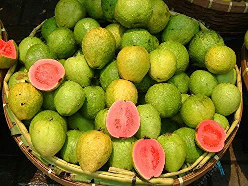seedsown 5 PC/Bolsa de Guayaba Vegetal orgánico Fruta Guayaba árbol Bonsai Tiesto Verduras y Frutas para jardín