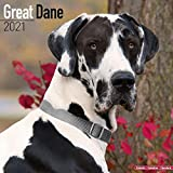 Great Dane Calendar (Euro) - Dog Breed Calendars - 2020 - 2021 wall calendars - 16 Month by Avonside