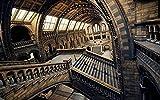 MX-XXUOUO Rompecabezas de 1000 Piezas Lugares Hermosos:Museo de Historia Natural de Londres, Inglaterra