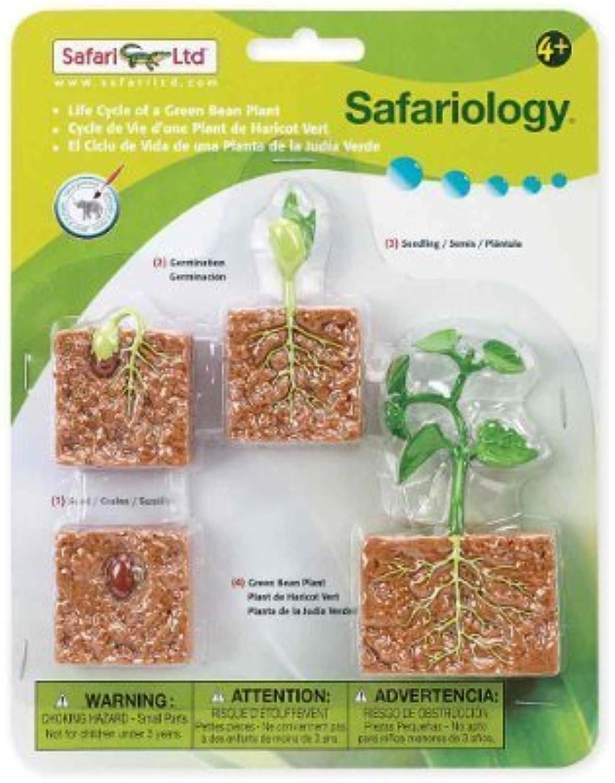 Safari Ltd Life Cycle of a verde Bean Plant by Safari Ltd. [giocattolo] (inglese uomoual)