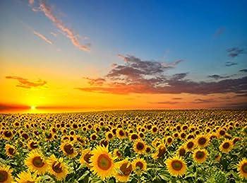 SweatDance Sunflowers in The Field 500-Piece Jigsaw Puzzle