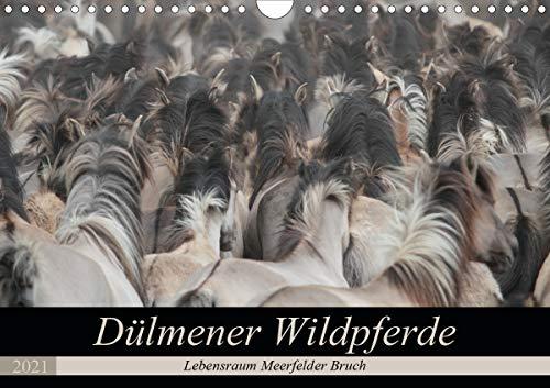 Dülmener Wildpferde - Lebensraum Meerfelder Bruch (Wandkalender 2021 DIN A4 quer)