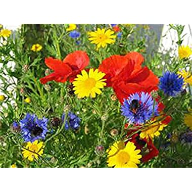 Wildflower Seed Mix , 4 ounces , Great for Colorful Border Gardens, ORGANIC, USA PRODUCT. JACOBS LADDER ENT BRAND