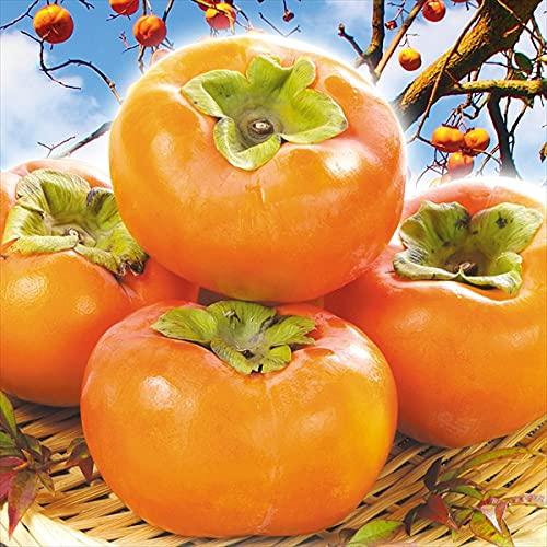 国華園 柿 和歌山産 大特価 富有柿 15�s (7.5kg×2箱) ご家庭用 食品