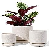 LE TAUCI Plant Pots