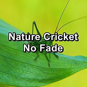 Nature Cricket No Fade