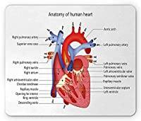 教育用長方形ファッション・トレンドマウスパッド、心臓の医学的構造人体解剖学臓器静脈心臓病学、滑り止めゴムバッキングファッション・トレンドマウスパッド、、コーラルレッドブルー