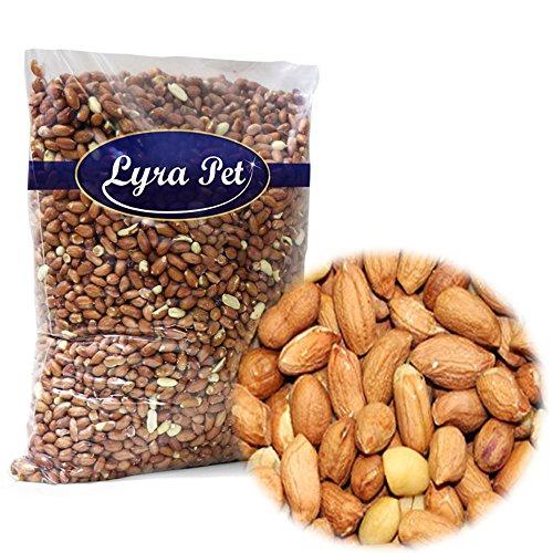 Lyra Pet 10 kg Erdnusskerne mit Haut ganze Erdnüsse Wildvogelfutter Streufutter