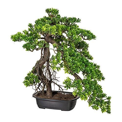 Kunstpflanze Bonsai Podocarpus grün, in schwarzer Kunststoffschale, ca. 55 x 45 cm