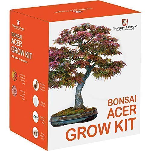 Acer Bonsai Plant Seed Growing Kit Grow Your Own Bonsai Trees, Great Gardener's Gifts, Acer Autumn Mix and Palmatum Seeds with Growing Equipment by Thompson and Morgan