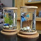 XIAOSAKU Tanque de Peces Pequeña Oficina de Cristal Aquarium Bamboo Base Mini Fish Tank Decoration Fish Bowl Fish Tank Mini AquaPonic Ecosystem Sala de Estar Pequeño Cuenco de Peces
