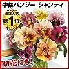 国華園 種 花たね 大輪パンジー シャンティ 1袋(20粒) 第4種郵便 /21年秋商品