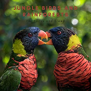 Jungle Birds and Rainforests for Focus and Sleep
