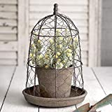 CTW Home Collection Chicken Wire Cloche with Terra Cotta Pot and Saucer