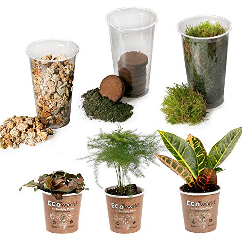 Ecoworld Tropical DIY Ecosystem Set - 3 Zimmerpflanzen - Substrat - Boden - Moos