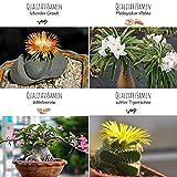 Exóticas semillas de cactus con alta tasa de germinación - Set de semillas suculentas para su propio hermoso cactus en flor (set de 4 semillas mixtas)