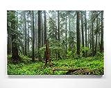 Wunderschöne Wald Bilder auf Leinwand. Fotomotiv – HOH