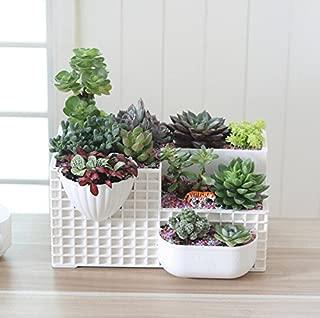 Mecai Modern White Succulent Planter Large Fairy Garden Plants,Office Decor for Men Women Desk Cute -12 inch
