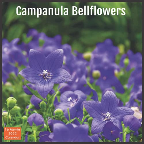 Campanula Bellflowers Calendar 2022: Official Bellflowers Calendar 2022, 16 Month Calendar 2022