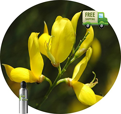 Fantastic Deal! Essential Oil Pure Broom Genet Spartium Junceum Natural Absolute Undiluted Herbal (1...