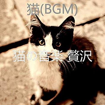 猫(BGM)