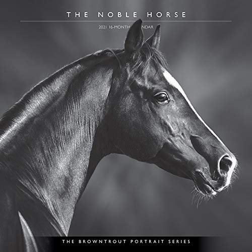 The Noble Horse 2021 Calendar (Browntrout Portrait)