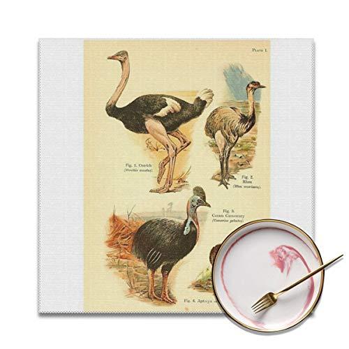 Komorebi12 William Playne Pycraft - Een Boek Van Vogels (1908) - Plaat 1 Struisvogelachtige Vogels 4 stks Placemat Antifouling Polyester, Warmte En Hittebestendige Anti-slip Wasbare Placemat Voor Keuken En Eten