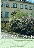 Kolkwitzien