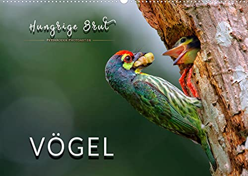 Vögel - Hungrige Brut (Wandkalender 2022 DIN A2 quer)
