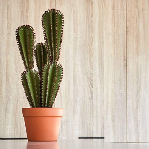 Catral Cactus Euphorbia SUZANNAE, Verde, 57.5 Cm