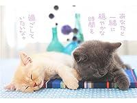 ポストカード 猫ネコ PB-412s