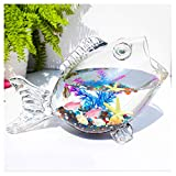 Tanque de cristal para peces y tortugas, mini ecosistema acuapónico, con arena de vidrio y conchas para decoración de mesa de té de oficina