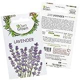 Lavender Plant Seeds: Premium Perennial Lavender Seeds for 100 Lavender Plants – Flower Seeds for Planting Outdoors – Lavender Seeds for Planting Outdoor – Lavendar Perennial Plants Seeds by OwnGrown