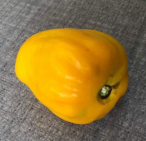 Tomate -Yellow Stuffer- 10 Samen -Ideal zum Füllen-