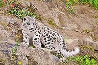 パズル500ピース大きな猫小動物クリスマスプレゼント52x38cm