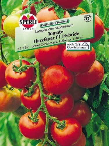 Tomate Harzfeuer F1 Hybride
