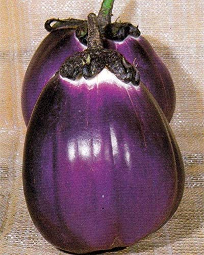 Details about  /Heirloom Eggplant Aubergine /'/'Violetta di Firenze/'/' ~150 Top Quality Seeds