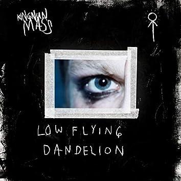 Low Flying Dandelion