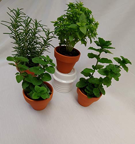 "Micky's Minis 41657 2"" Clay Pot Herbs, Miniatures, Greens"