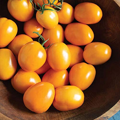 David's Garden Seeds Tomato Paste Roma Sunrise Sauce 4376 (Orange) 25 Non-GMO, Hybrid Seeds