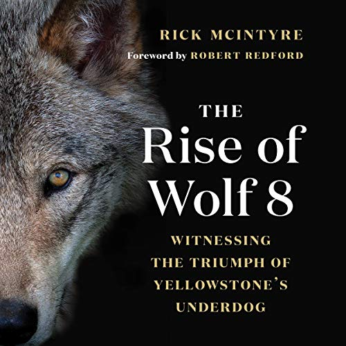 The Rise of Wolf 8 audiobook cover art