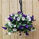 JustArtifical Artificial Silk Pansy Ball Hanging Basket - Blue and White Pansies