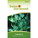 Maggikraut | Liebstöckel | Maggikrautsamen | Samen für Levisticum officinale | Liebstöckelsamen